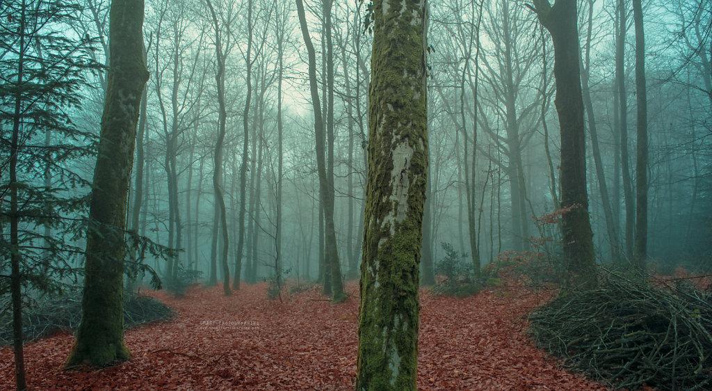Brouillard de décembre